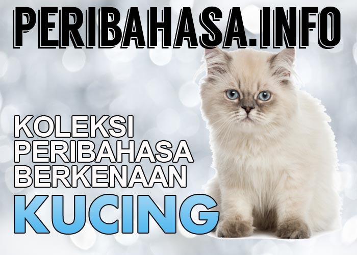 peribahasa kucing